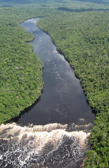 Aerial view of a river surrounded by lush green forest.